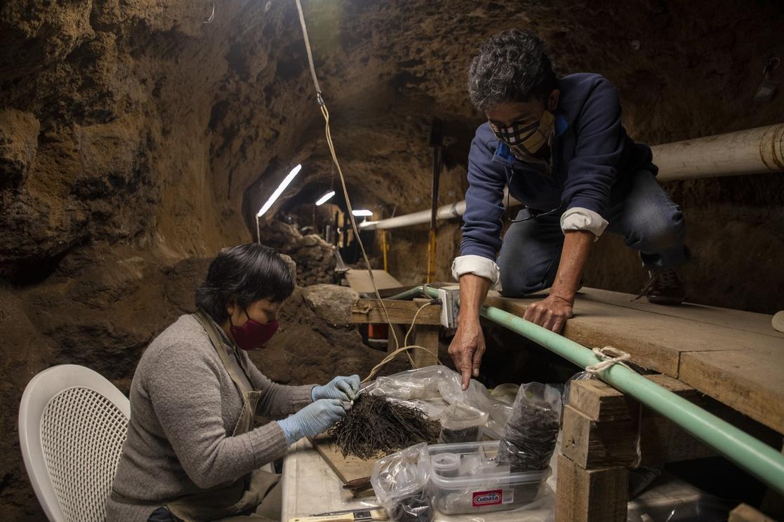 В Мексике впервые в мире нашли целые букеты возрастом 2000 лет.Вокруг Света. Украина