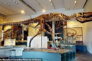 Благодаря компьютерной томографии открыли два новых вида тираннозавра