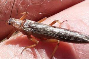 Из-за уничтожения лесов насекомые эволюционируют ускоренными темпами
