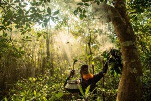 Бегущий тигр, танцующий прыгун: опубликованы лучшие фото мангровых лесов