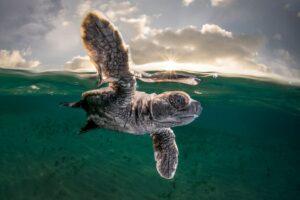 Победили черепахи: опубликованы самые впечатляющие фото из жизни океана