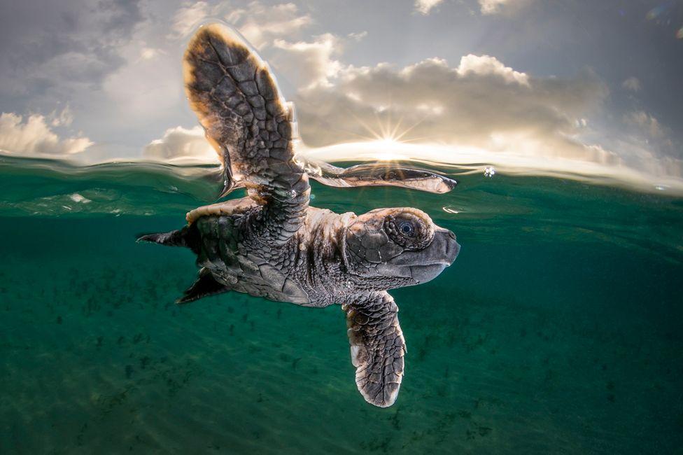 Победили черепахи: опубликованы самые впечатляющие фото из жизни океана.Вокруг Света. Украина