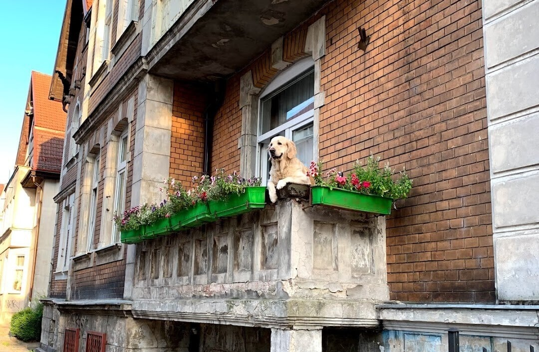 пес на балконе