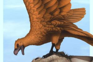 В Аргентине найдены окаменелости гигантских хищных птиц