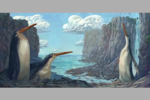В Новой Зеландии открыли новый вид древних гигантских пингвинов