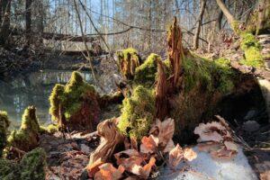 Гниющие деревья оказались более крупным источником выбросов СО2, чем нефть и газ