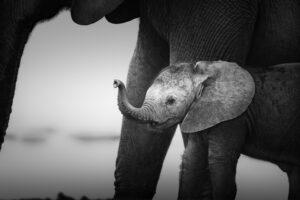 На пляже в Испании нашли следы новорожденных слонят древнего вида