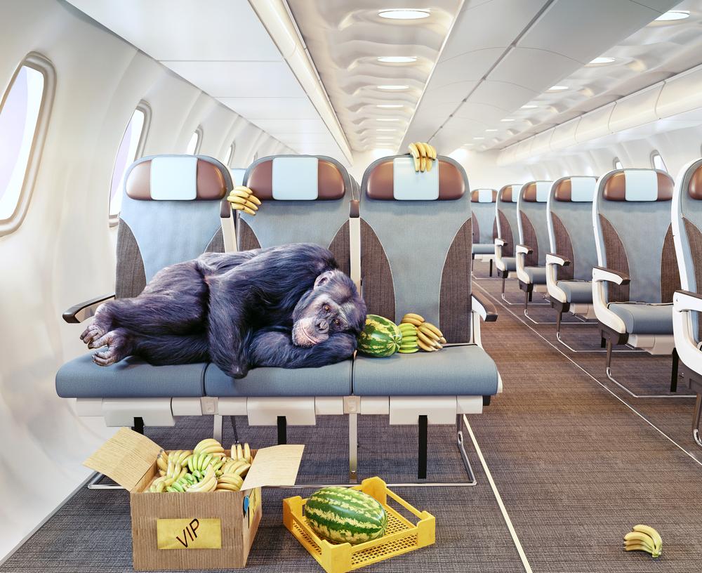 Какое место в самолете самое лучшее и как его занять.Вокруг Света. Украина
