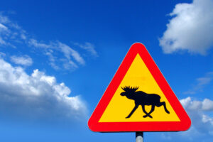 Полиция Стокгольма просит жителей не делать селфи с лосями