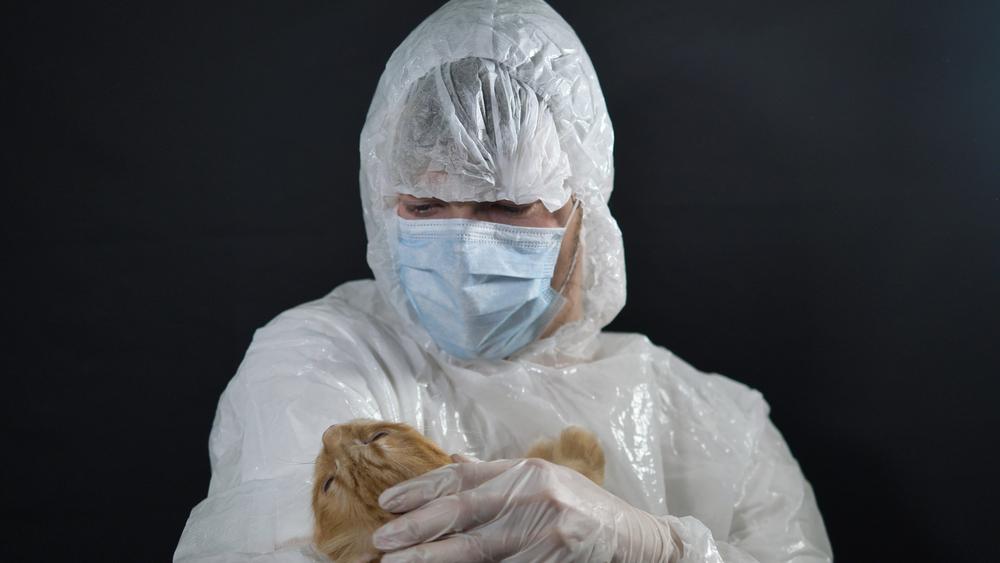 Американка заразилась чумой от домашней кошки