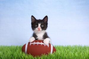 В Америке кот сорвался с высоты во время футбольного матча, но его успели поймать