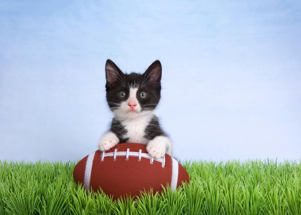 В Америке кот сорвался с высоты во время футбольного матча, но его успели поймать.Вокруг Света. Украина