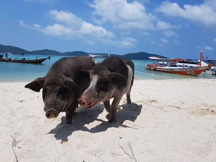 Ко-Мадсум: зачем ехать на Остров Свиней в Таиланде?.Вокруг Света. Украина