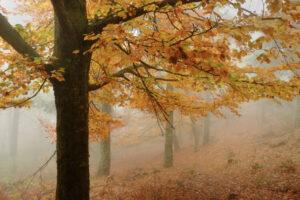 Осень началась: почему 22 сентября - дата начала астрономической осени?