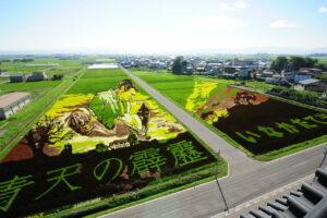 Как жители маленького городка в Японии превратили рисовые поля в живописные шедевры