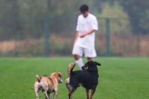 В Полтавской области две собаки и лошадь сыграли в футбол