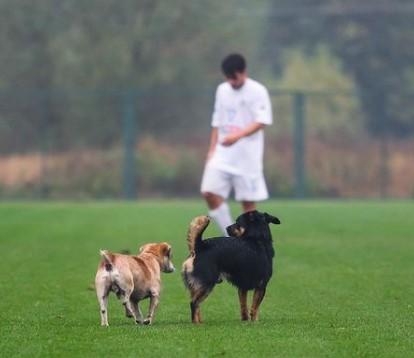 В Полтавской области две собаки и лошадь сыграли в футбол.Вокруг Света. Украина