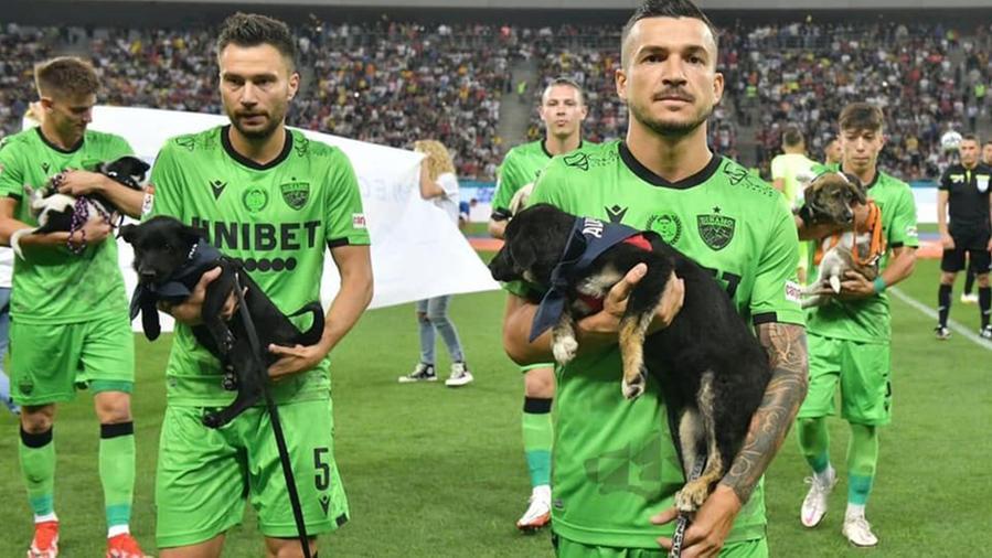 В Румынии футболисты выходят на поле с бездомными собаками