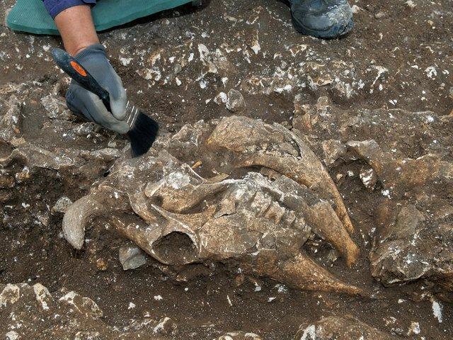 В Англии нашли могилу ребенка, полную жертвенных животных