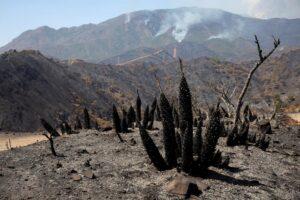 На юге Испании из-за лесных пожаров эвакуированы тысячи людей