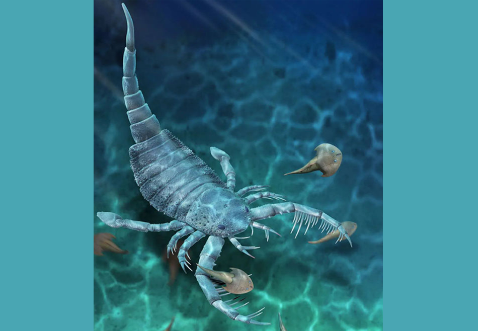 В Китае обнаружили окаменелости гигантского морского скорпиона: им 435 млн лет.Вокруг Света. Украина