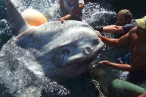 У берегов Африки поймали самую большую рыбу в истории (не считая акул)