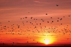 Перелетные птицы могут прекратить миграцию из-за глобального потепления