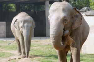 Слоны умеют оценивать свою выгоду