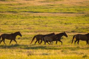 Современные домашние лошади появились в степях Причерноморья