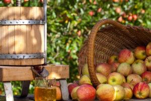 Апфельвайн и традиции винопития в Германии