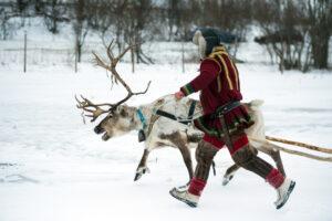 Суд Норвегии постановил, что ветряки вредят саамским оленеводам