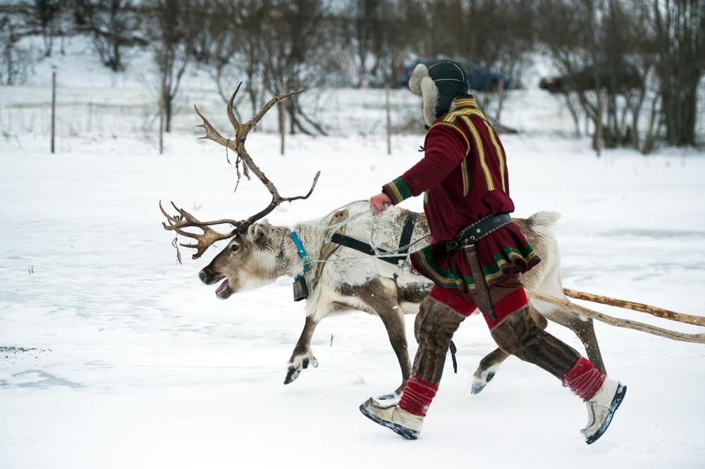 Суд Норвегии постановил, что ветряки вредят саамским оленеводам.Вокруг Света. Украина