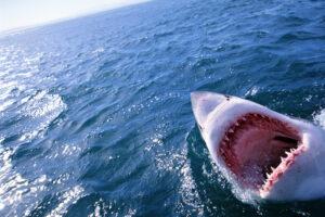 Самые странные акулы: огромные глаза, светящиеся шипы, плавники-ноги и карманы для феромонов