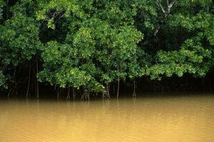 В ловушке времени: как в Мексике появился реликтовый мангровый лес вдали от океана