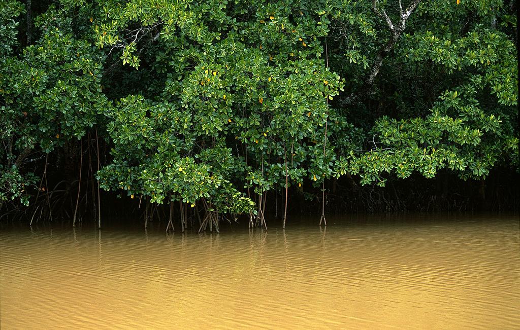 В ловушке времени: как в Мексике появился реликтовый мангровый лес вдали от океана.Вокруг Света. Украина
