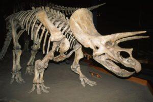 Самый полный в мире скелет трицератопса продан за $8 млн. на парижском аукционе