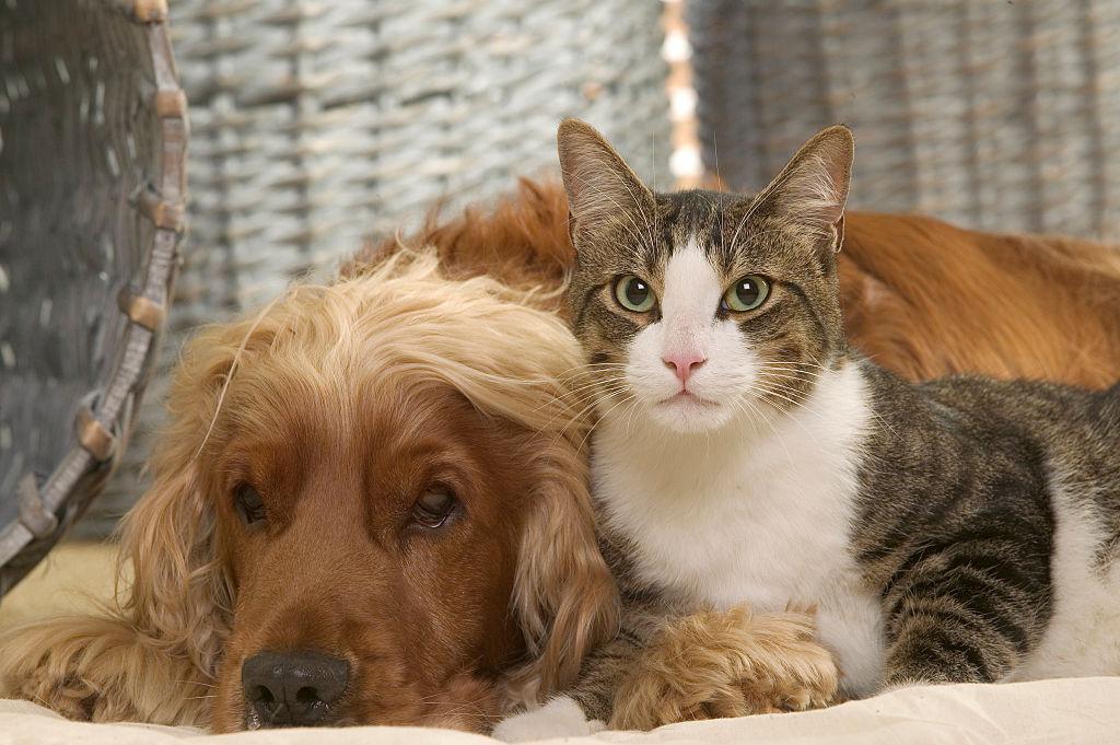 Кто умнее - кошки или собаки?.Вокруг Света. Украина
