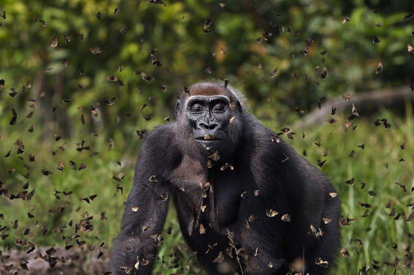 Невероятные фото дикой природы, которую нужно охранять.Вокруг Света. Украина