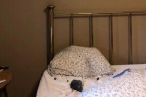 В Канаде метеорит упал на кровать, где спала женщина. Спойлер: никто не погиб
