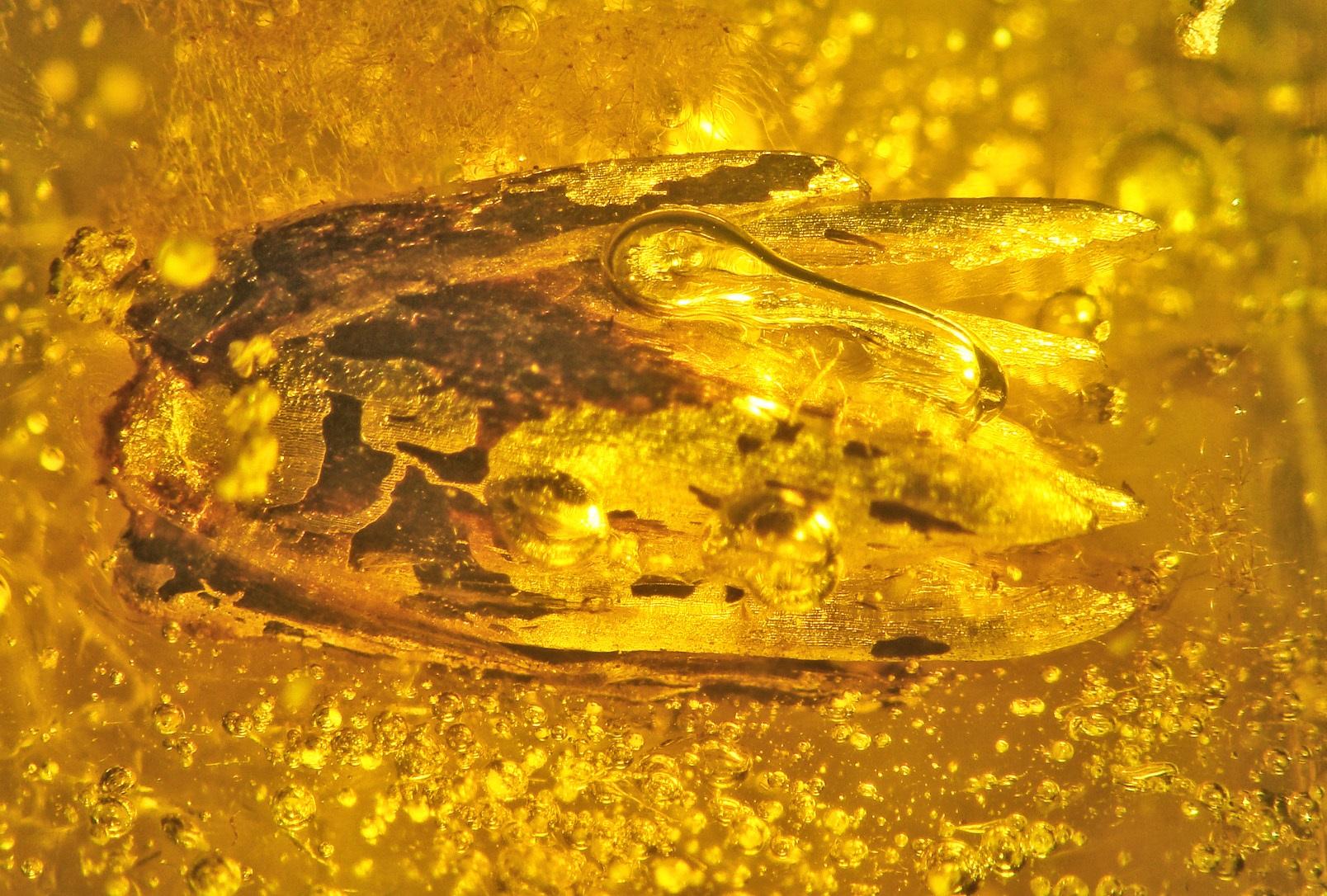 Палеоботаники впервые выяснили, какое растение застыло в янтаре.Вокруг Света. Украина