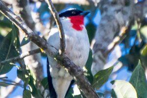 В Бразилии нашли гнездо птиц, которых в мире осталось несколько десятков