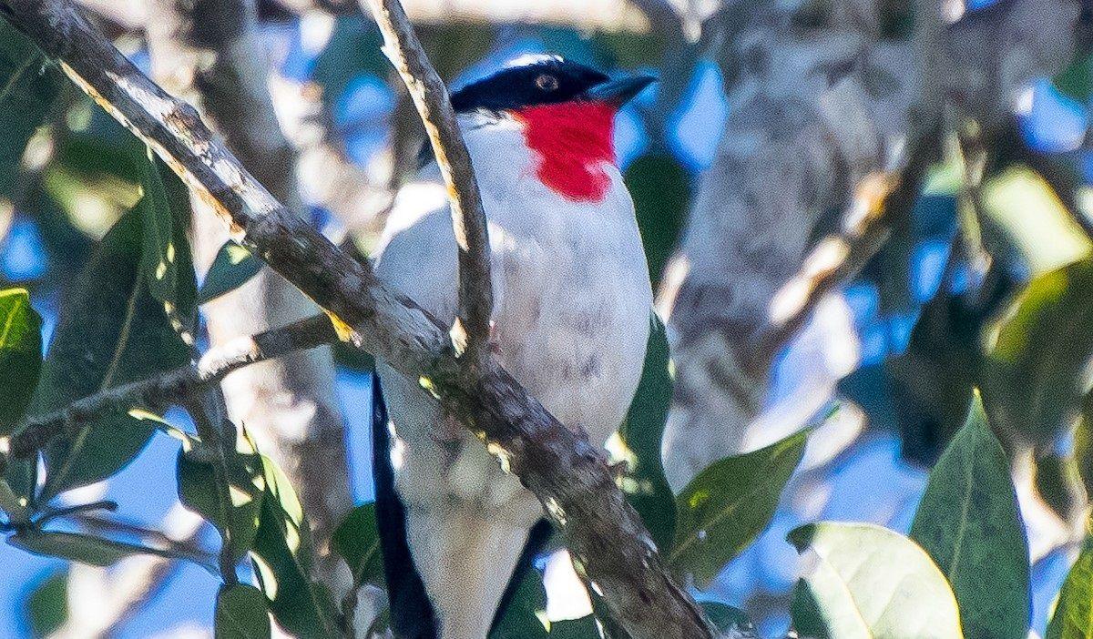 В Бразилии нашли гнездо птиц, которых в мире осталось несколько десятков.Вокруг Света. Украина