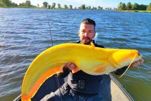 В Нидерландах рыбак поймал сома канареечного цвета